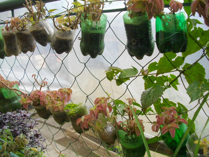 plants in Creative & Inspiring Modern Ideas of How To Recycle Plastic Bottles  homesthtics (25)