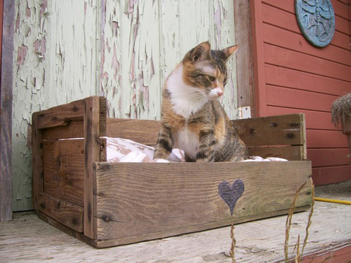 kitten Creative & Inspiring Modern Methods of How to Recycle Wooden Pallets homesthetics (1)