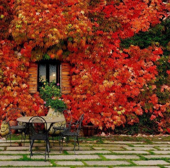 red leafs in DIY -Welcome the Fall with Warm and Cozy Patio Decorating Ideas homesthetics (41)