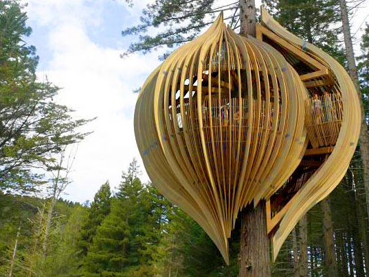 Up in a Tree by Pacific Environments NZ Ltd