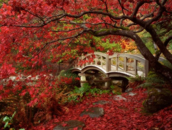 Backyard Landscaping Ideas Japanese Gardens red tree