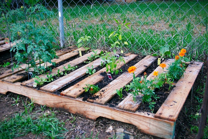 pallets used to aid flower growth CreativeInspiring-Methods-of-Recycling-Wooden-Pallets-Into-Your-Own-Garden