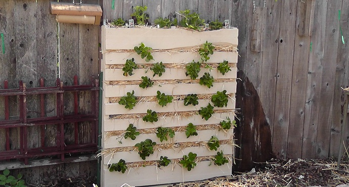 simple green wall on a pallet CreativeInspiring-Methods-of-Recycling-Wooden-Pallets-Into-Your-Own-Garden