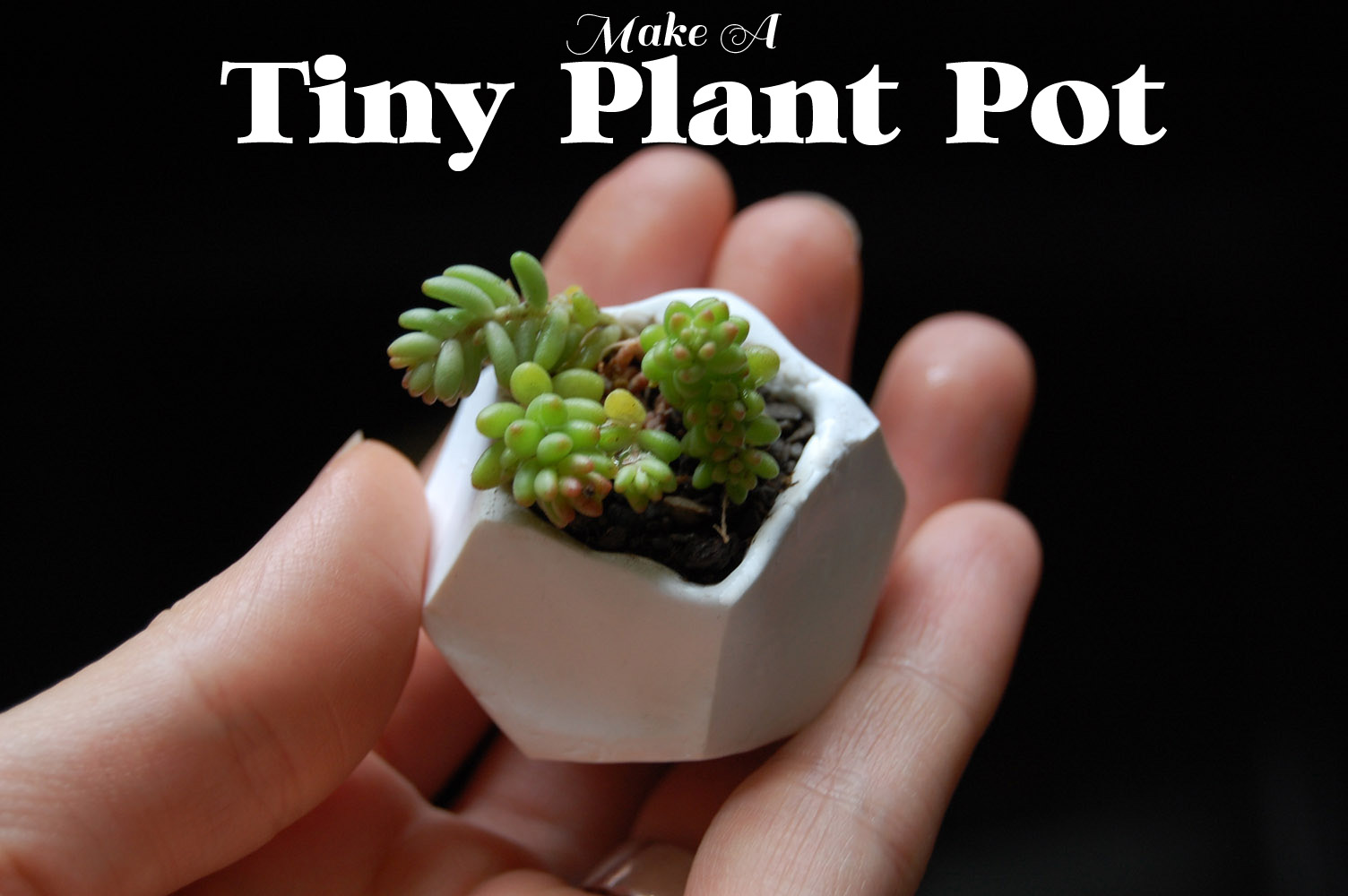 Creative DIY Herbs & Flower Pots for your Home homesthetics