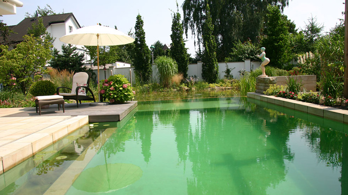 green lush vegetation by the swimming pool
