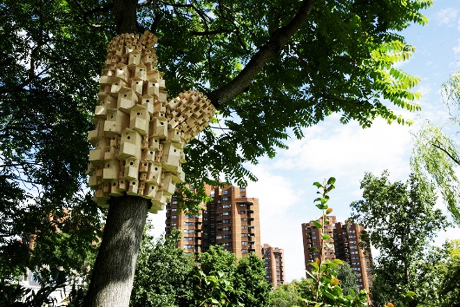 Urban Green Spaces Biodiversity- Spontaneous City Structure For Birds