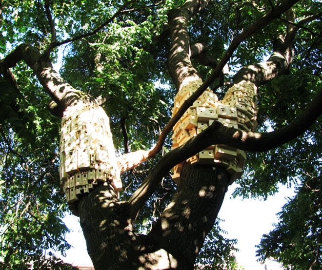 ecology enhanced by Urban Green Spaces Biodiversity- Spontaneous City Structure For Birds