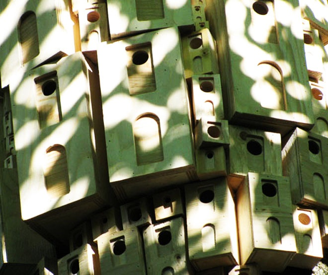 detail shot Urban Green Spaces Biodiversity- Spontaneous City Structure For Birds