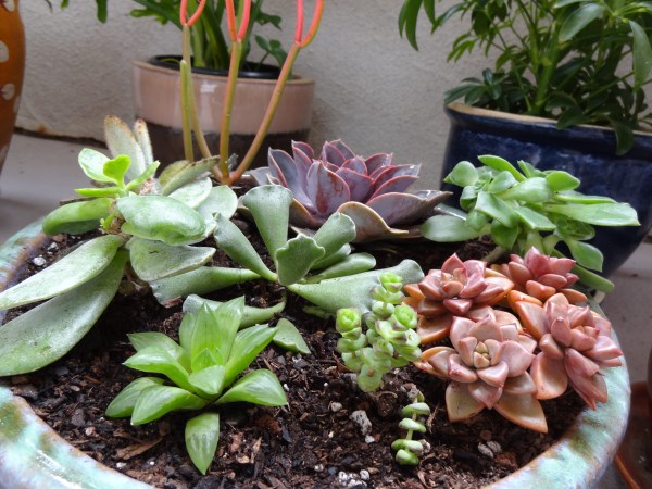 Shaded Loving Succulents Arrangement