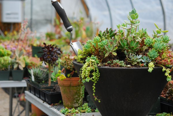 Eye Popping Eye Catching Succulents Containers