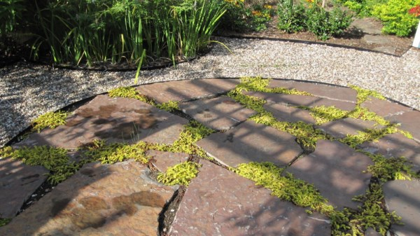 Creeping Jenny Can Help You Fill in Spaces Between Different Types of Floors