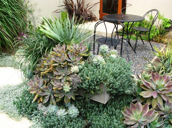 Succulents Overflowing on a Patio and Defining Spatiality