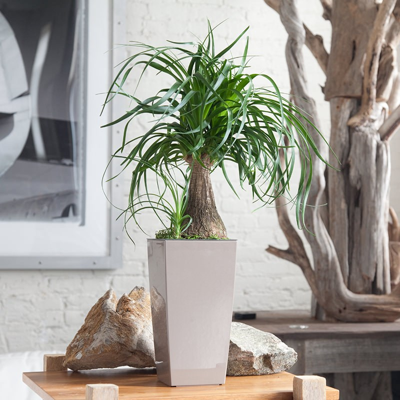 6 Beautiful Houseplants Safe For Cats And Dogs That You Should Know