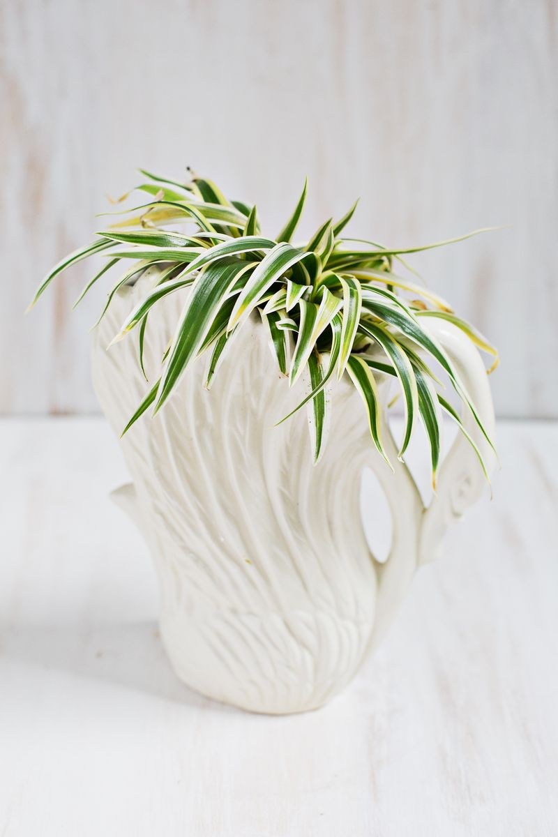 Beautiful Swan Planter Holding a Spider Plant