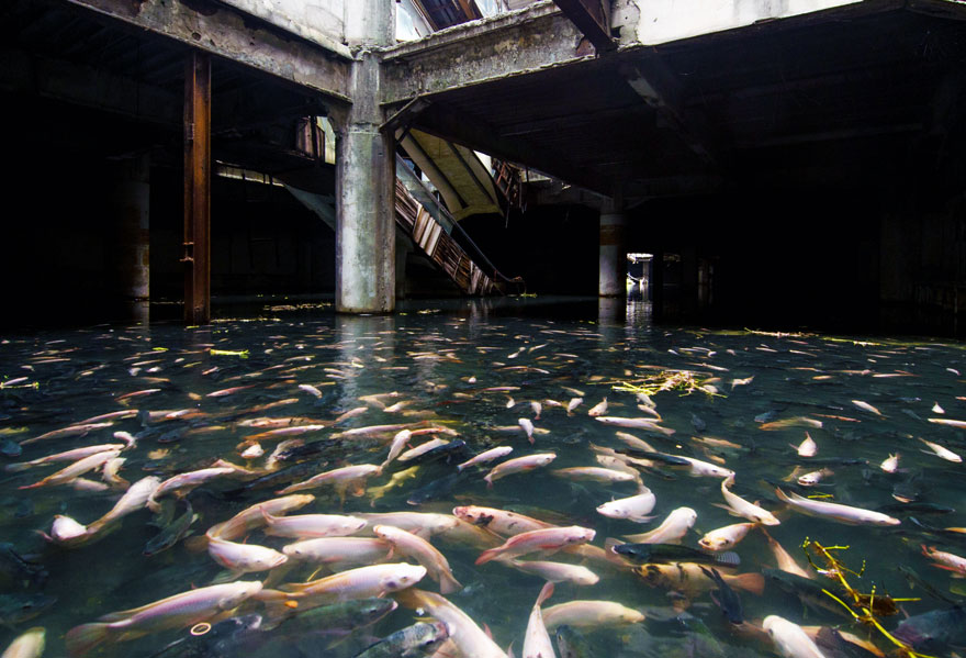 Bangkok's abandoned Mall occupied by fish
