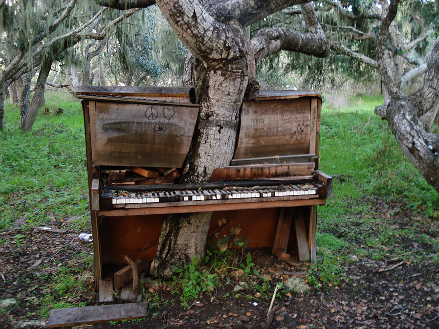 A Tree grows through an Old Piano, California  [ Read More at https://homesthetics.net/?p=16424 © Homesthetics - Inspiring ideas for your home.]