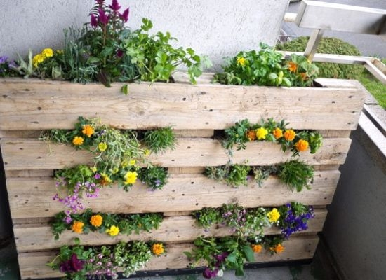 Wood pallets used as plantpots by organic authority