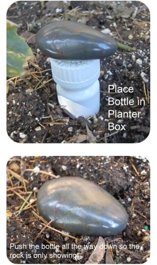 Simple Plastic Bottle Buried in the Ground and Marked by One Rock
