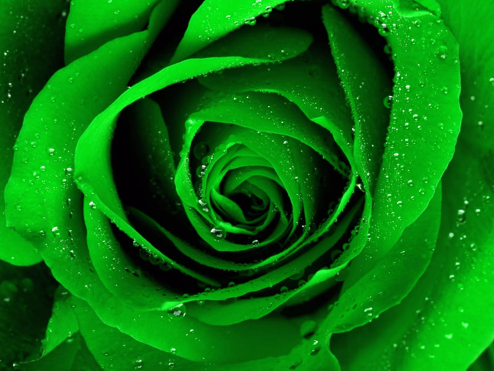 complete green rose