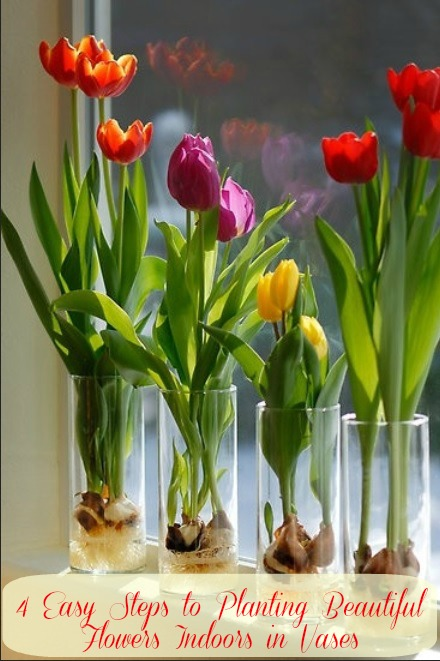 Be Green and Grow Tulips Indoor