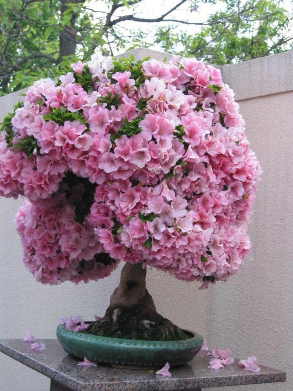54 Unique And Attractive Bonsai Tree Design Ideas Beautiful Pink Bonsai Flower Collection For Interiors Decoration Homesthetics Inspiring Ideas For Your Home