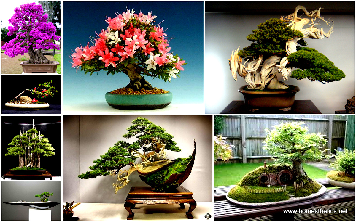 The most beautiful and unique bonsai trees in the world mightylinksfo