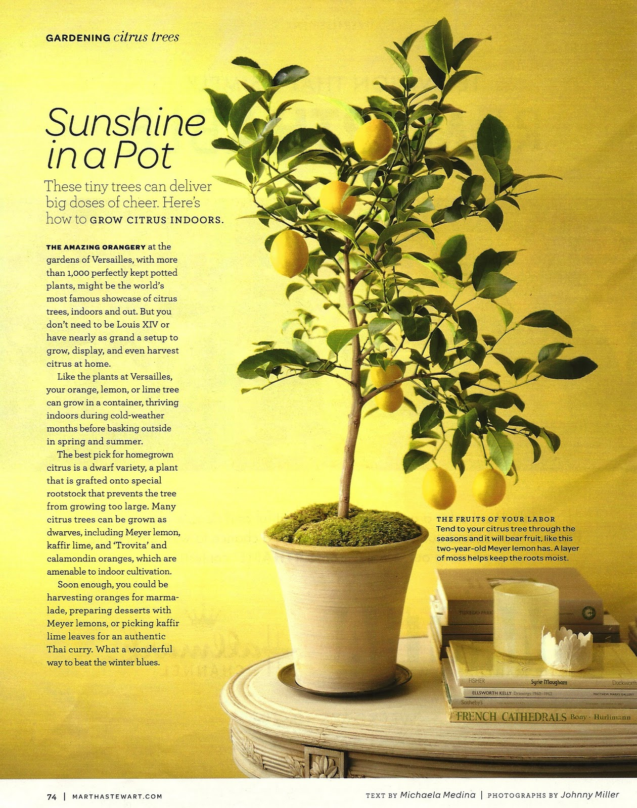 Grow Your Own Lemon Tree Out Of Store Bought Lemons In 11 Easy Steps-homesthetics (10)