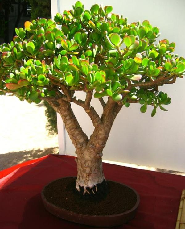 The Most Beautiful And Unique Bonsai Trees In The World-homesthetics (14)