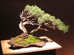 The Most Beautiful And Unique Bonsai Trees In The World-homesthetics (24)