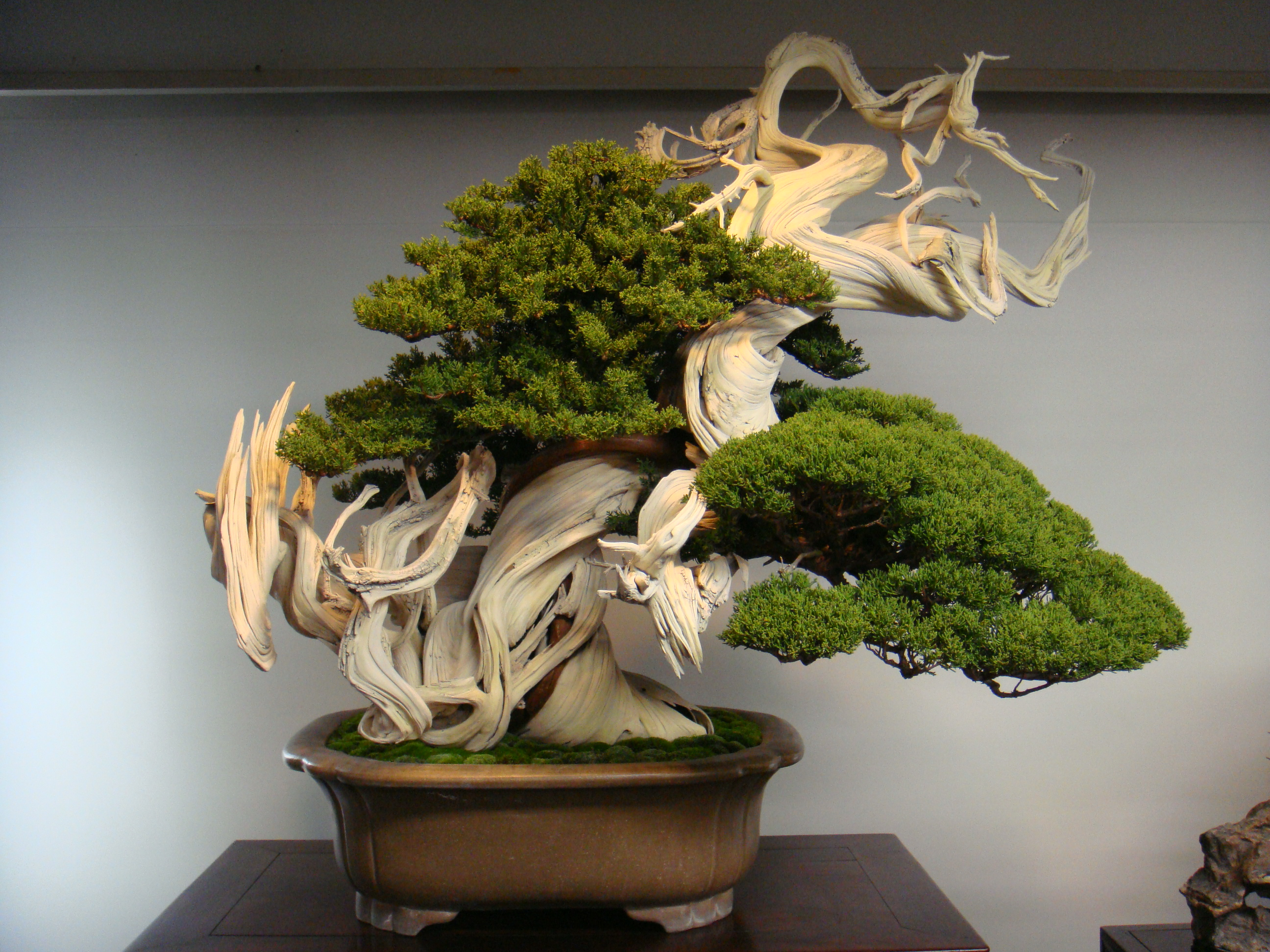 The Most Beautiful And Unique Bonsai Trees In The World-homesthetics (27)