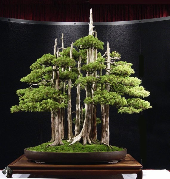 The Most Beautiful And Unique Bonsai Trees In The World-homesthetics (28)