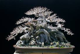 The Most Beautiful And Unique Bonsai Trees In The World-homesthetics (29)