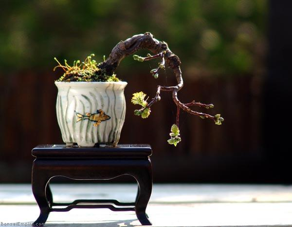 The Most Beautiful And Unique Bonsai Trees In The World-homesthetics (3)