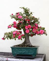 The Most Beautiful And Unique Bonsai Trees In The World-homesthetics (30)
