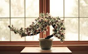 The Most Beautiful And Unique Bonsai Trees In The World-homesthetics (31)