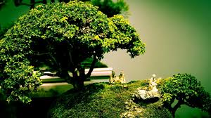 The Most Beautiful And Unique Bonsai Trees In The World-homesthetics (33)