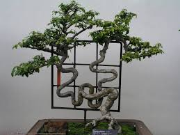 The Most Beautiful And Unique Bonsai Trees In The World-homesthetics (34)