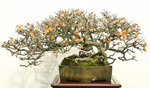 The Most Beautiful And Unique Bonsai Trees In The World-homesthetics (36)