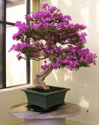 The Most Beautiful And Unique Bonsai Trees In The World-homesthetics (37)