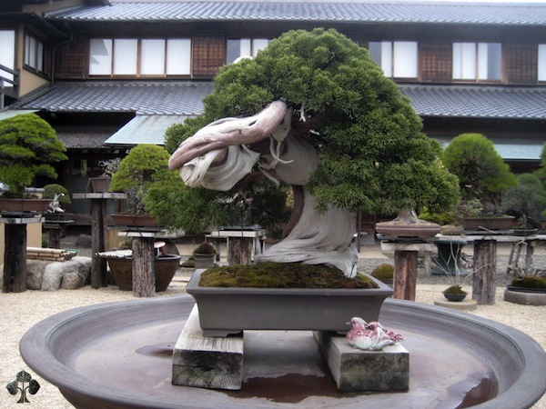 The Most Beautiful And Unique Bonsai Trees In The World-homesthetics (38)
