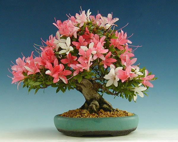 The Most Beautiful And Unique Bonsai Trees In The World-homesthetics (4)