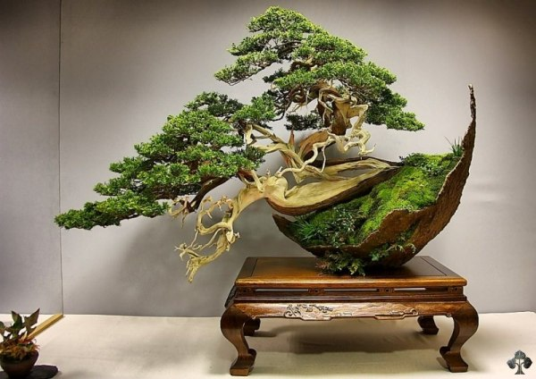 The most beautiful and unique bonsai trees in the world - Lovely unique exterior design in a childcare with flashy interior ...