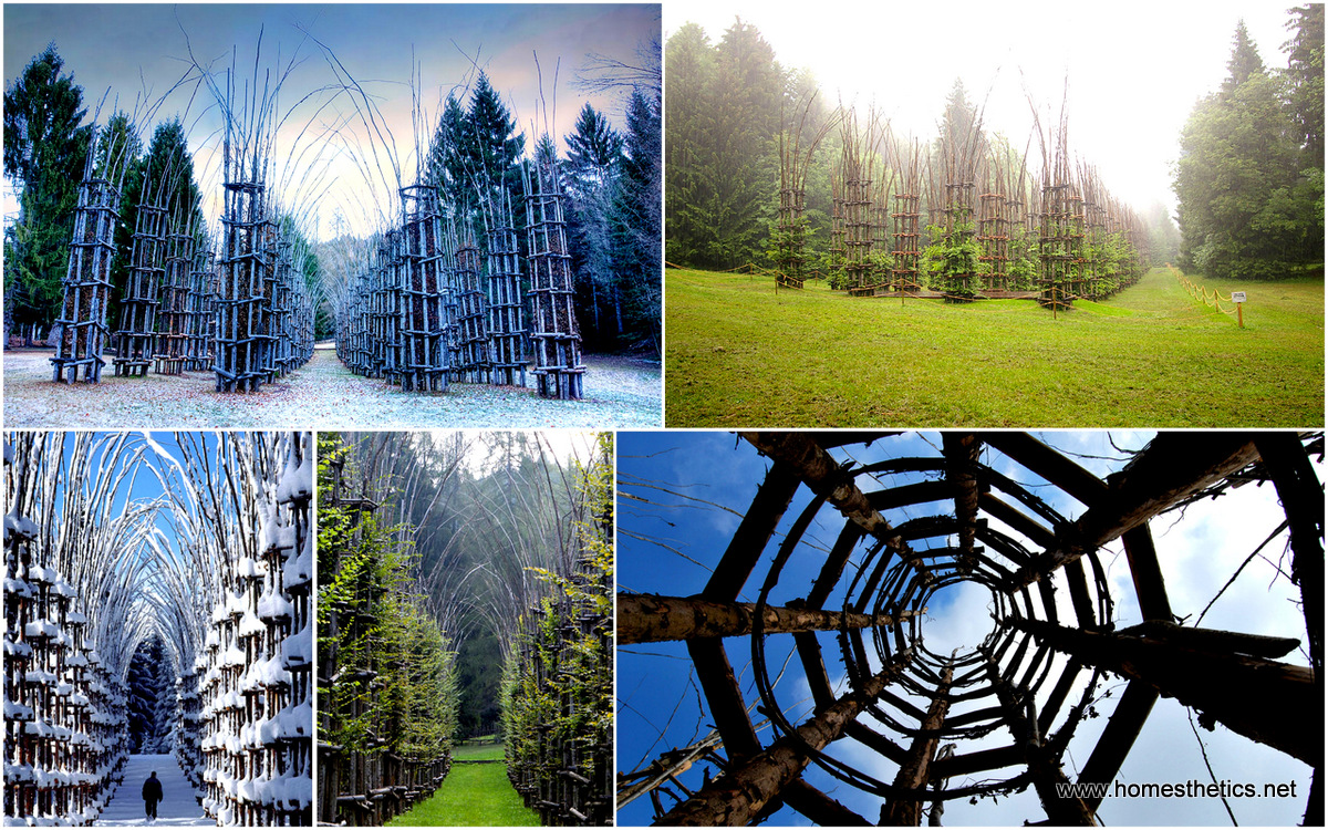 A Majestic Cathedral Made Of Living Breathing Trees