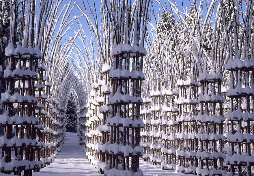 Whimsical Fairy Tale Cathedral Composed Out Of Living Breathing Trees homesthetics (2)