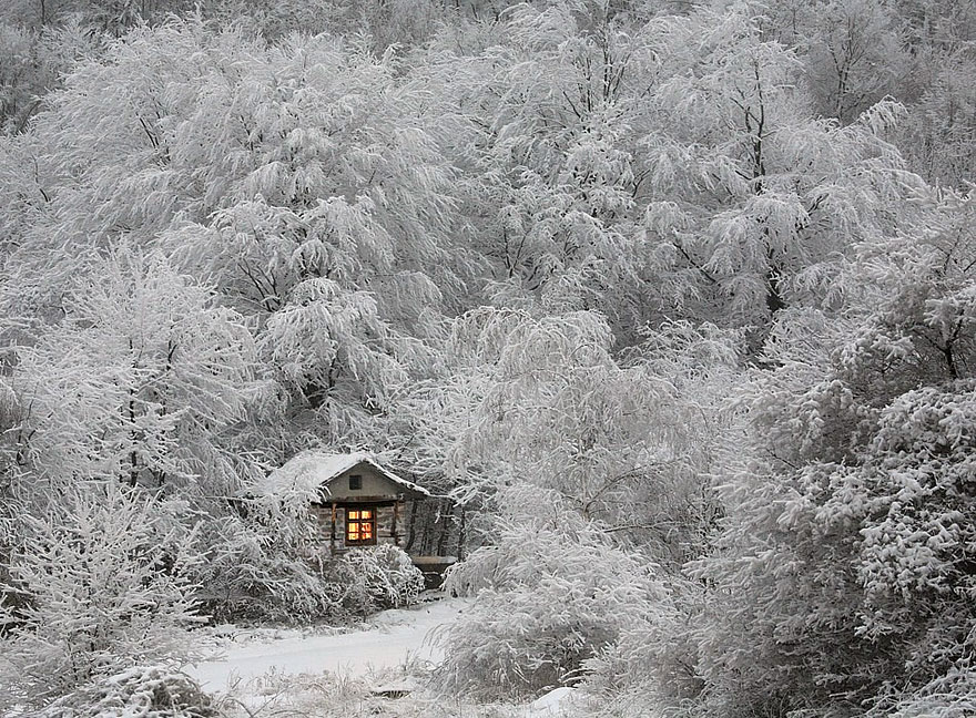 20 Perfect Lonely Little Houses Blending in Nature For The Quiet Calm Solitary Souls  homesthetics (15)