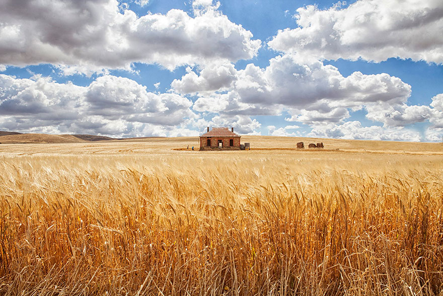 20 Perfect Lonely Little Houses Blending in Nature For The Quiet Calm Solitary Souls  homesthetics (4)