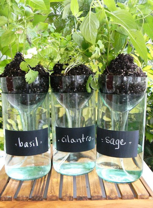 Self Watering Wine bottle Planters to realize at home
