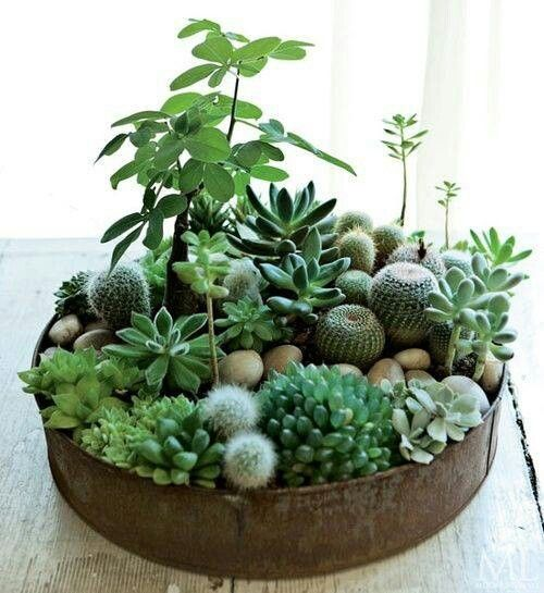 Invite Nature In With 20 Incredible Indoor Plants Ideas-homesthetics (11)