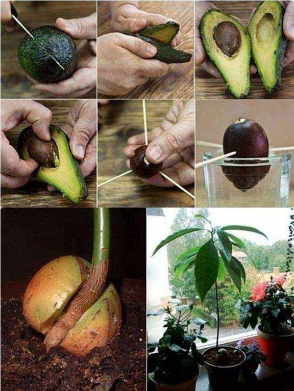 24 Highly Creative and Clever Gardening Tricks Tutorials to Enhance You Garden