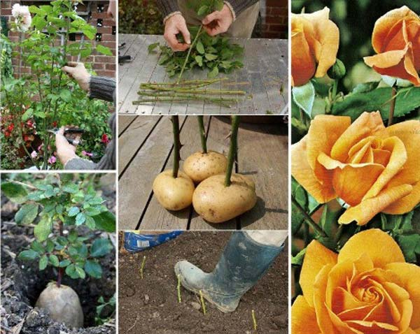24 Highly Creative and Clever Gardening Tricks to Enhance Garden homesthetics decor (3)